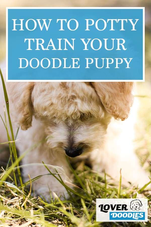 How to Potty Train Your Doodle Puppy