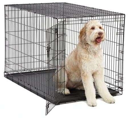 Best Dog Crates for Goldendoodles