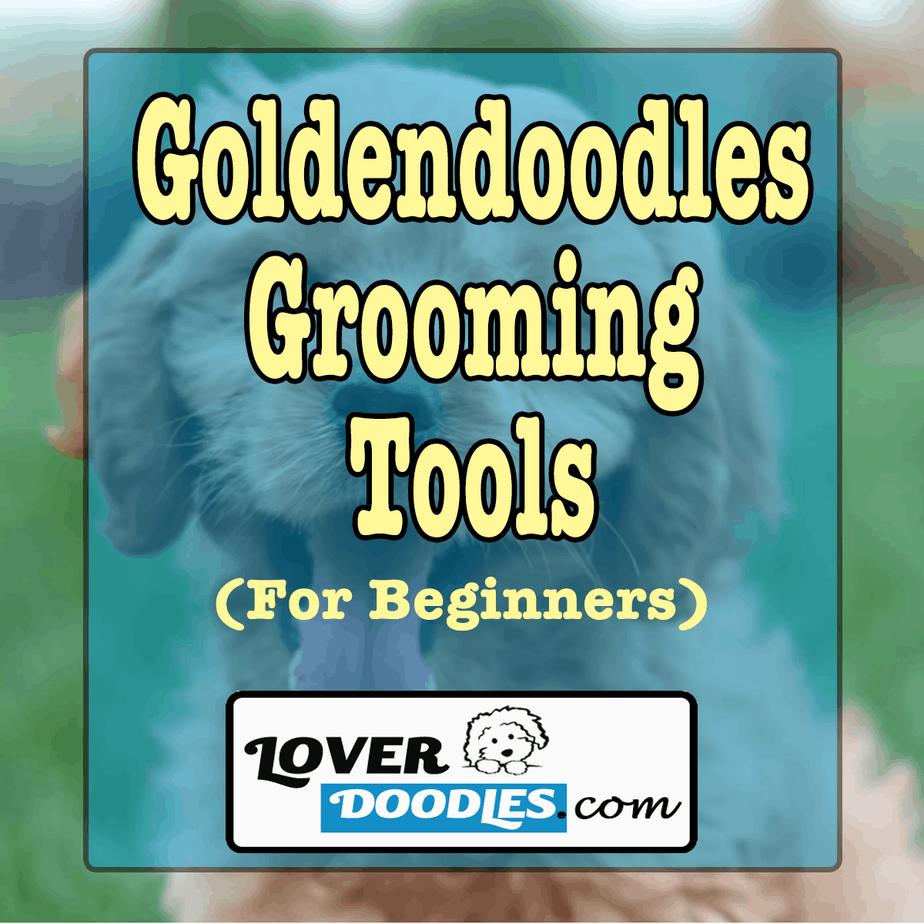 Goldendoodles grooming tools