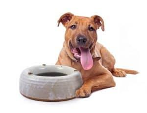 Modern Artisans American Made Heavy-Weight Splash-Free Stoneware Water Bowl Dogs