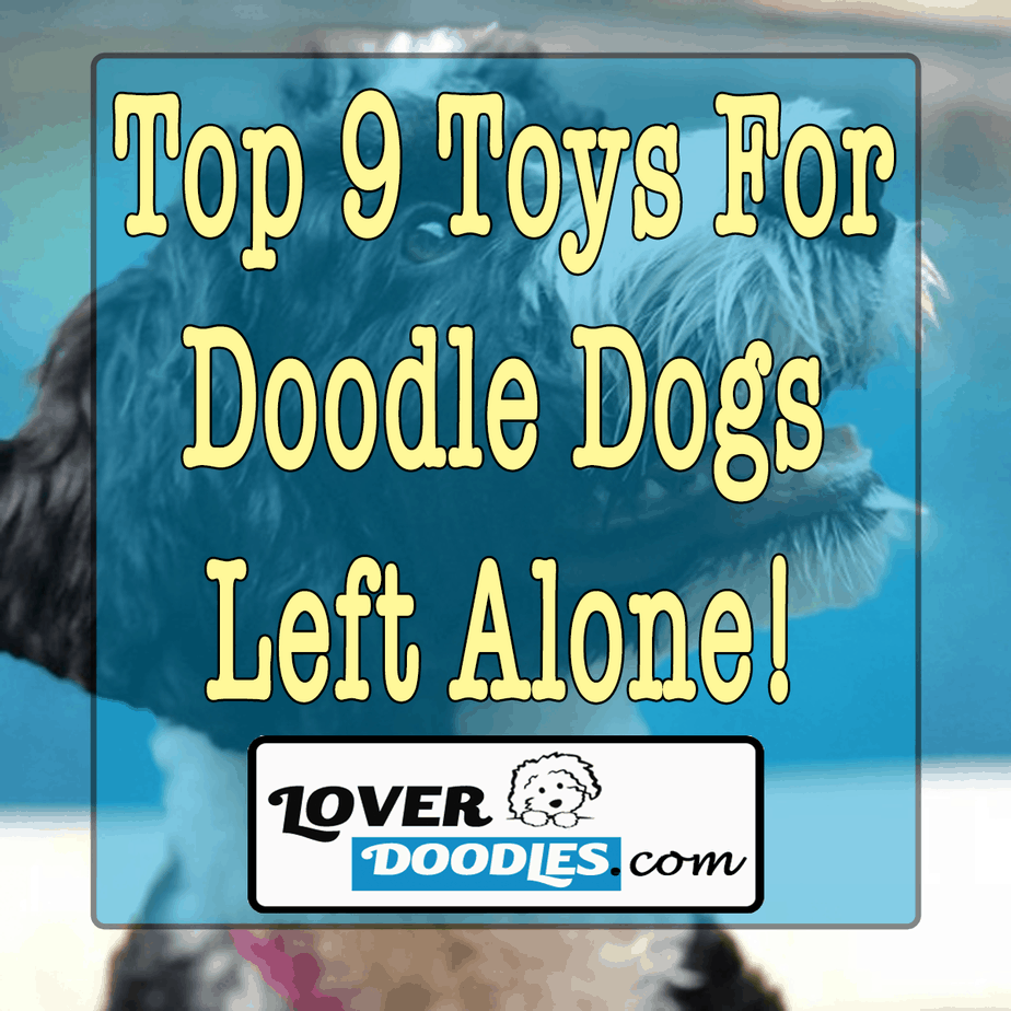 Toys For Doodle Dogs That Are Left Alone