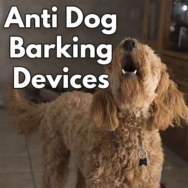 How to stop my dog from barking?