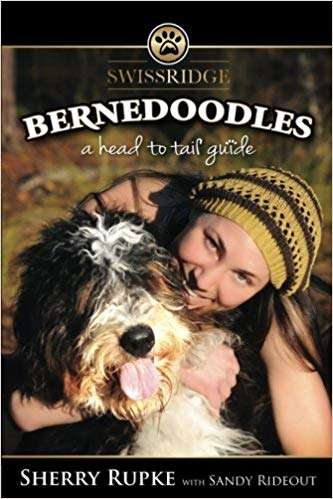 Bernedoodles - Head to Tail Guide