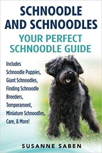 Your Perfect Schnoodle Guide