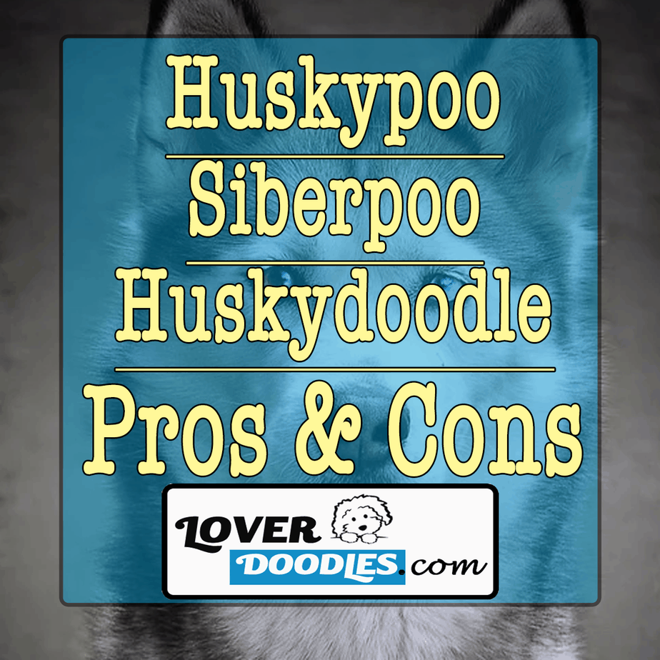 Pros And Cons Of Owning A Huskypoo