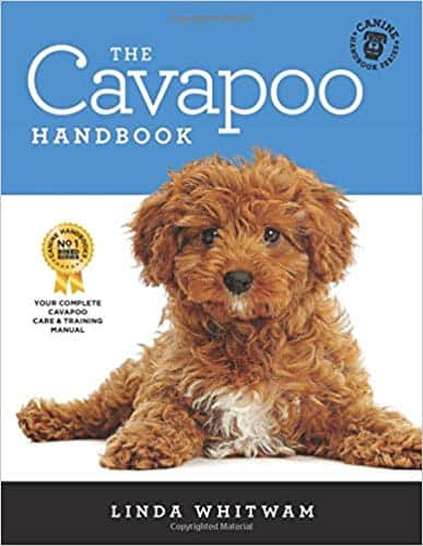 The Cavapoo Handbook