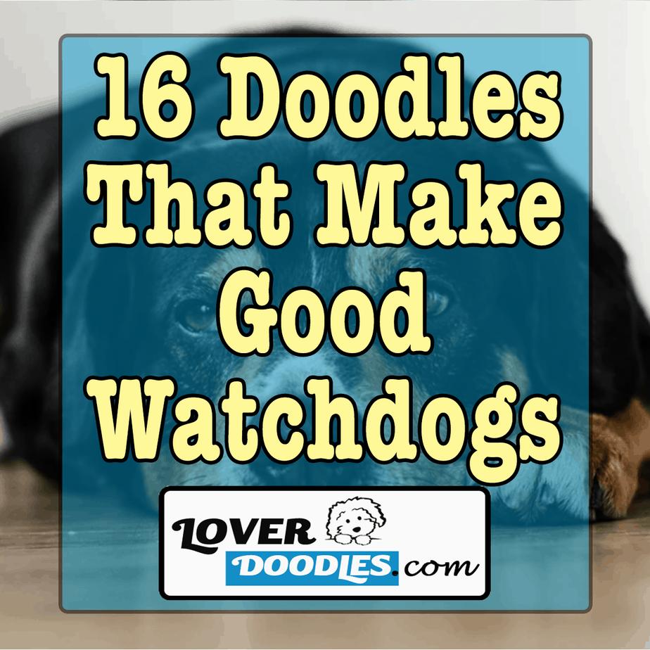 16 Doodles That Make Good Watchdogs