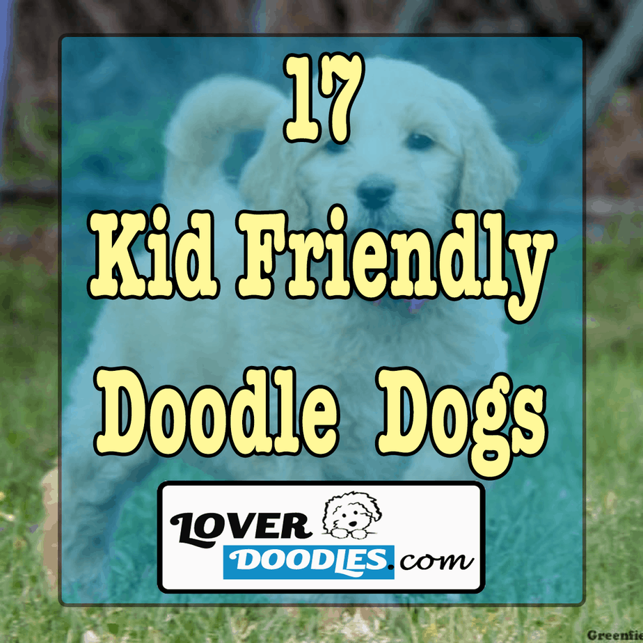 17 Kid Friendly Doodle Dogs