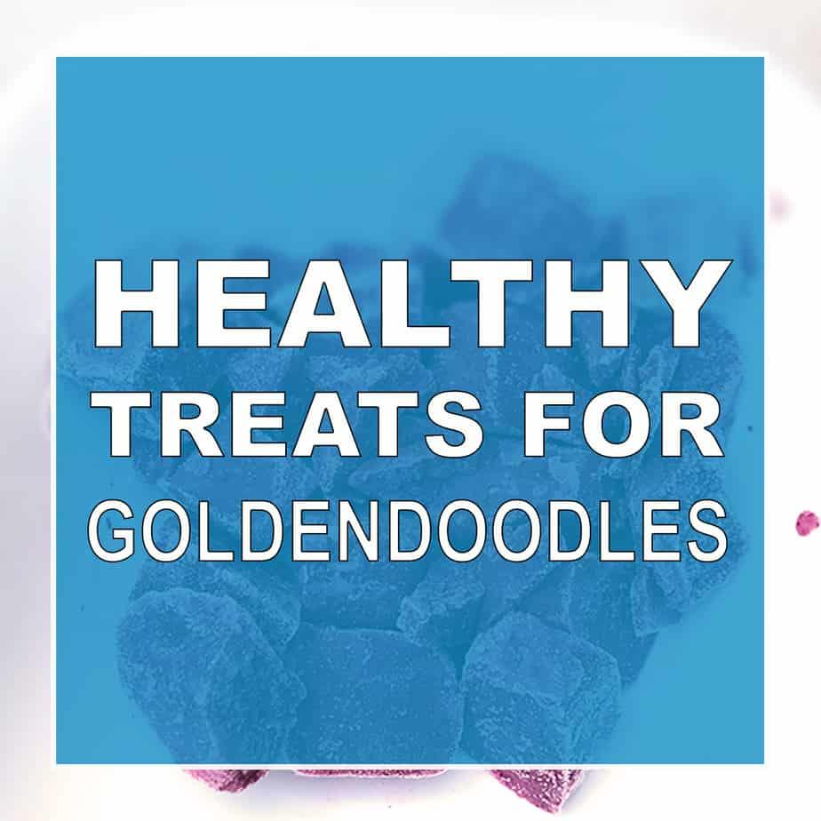 Healthy Snacks for Goldendoodles