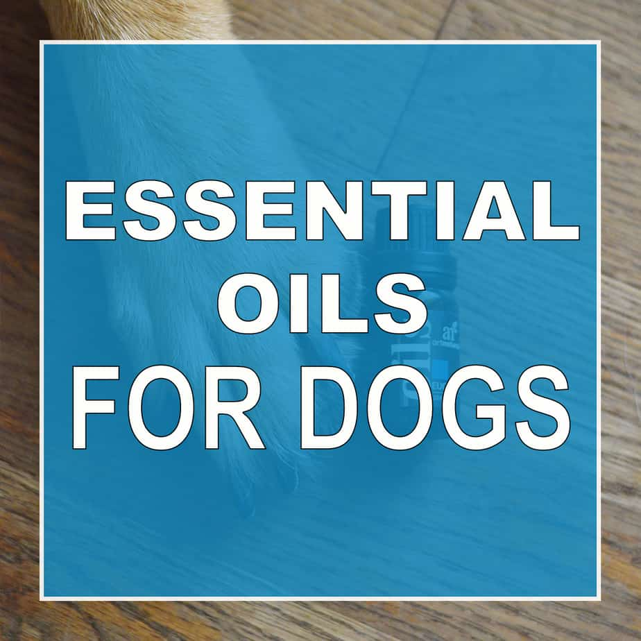 7 Best Essential Oils For Doodle Dogs