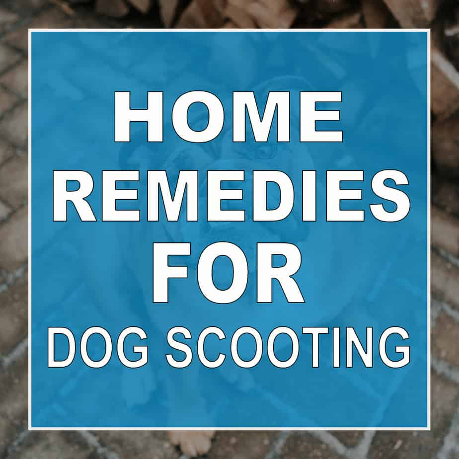10 Home Remedies For Dog Scooting