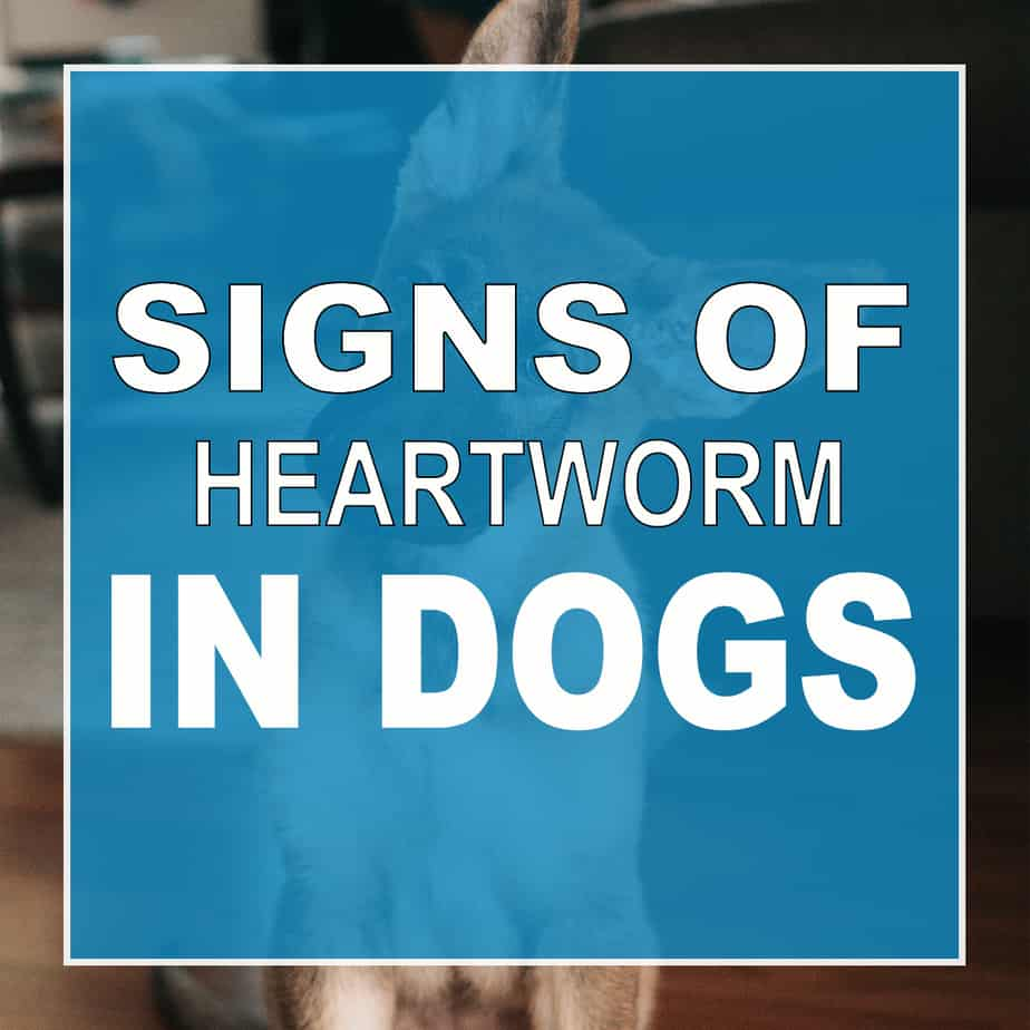 Signs Of Heartworms In Dogs