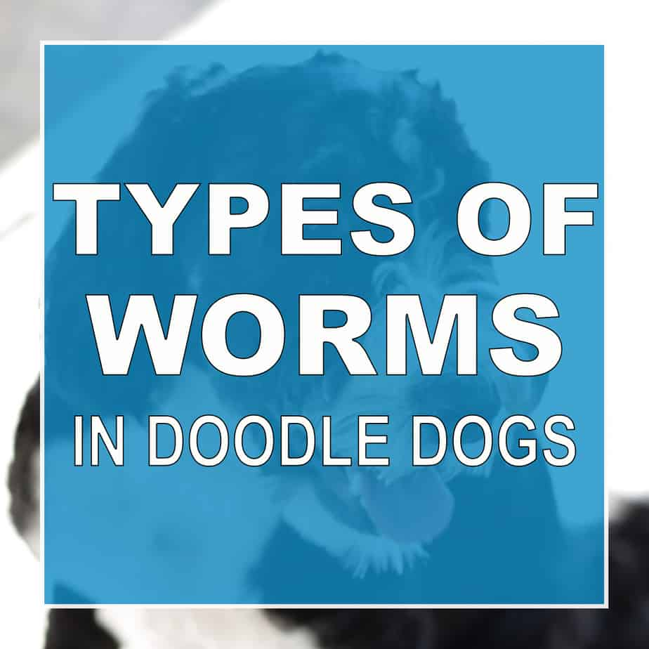 5 Different Types Of Worms In Doodle Dogs