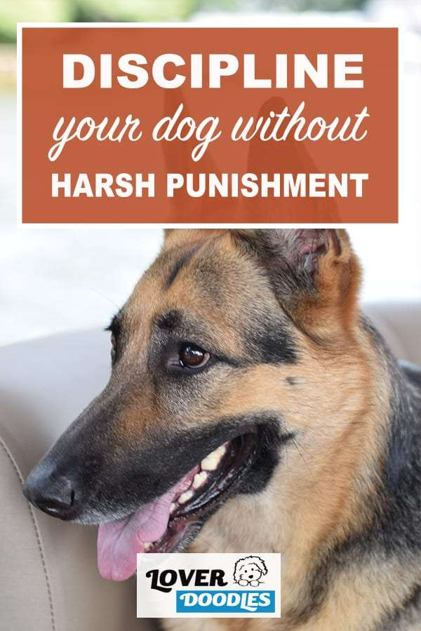 how to discipline your dog without harsh punishment pin