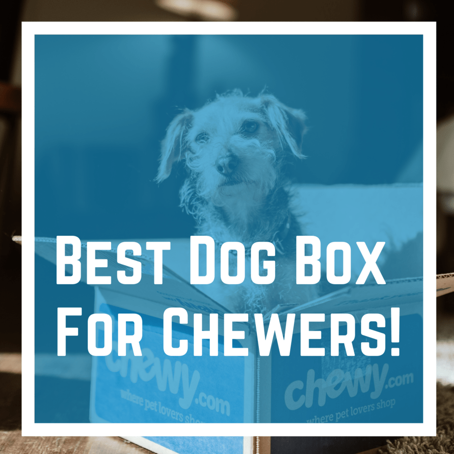 Best Dog Box For Chewers!
