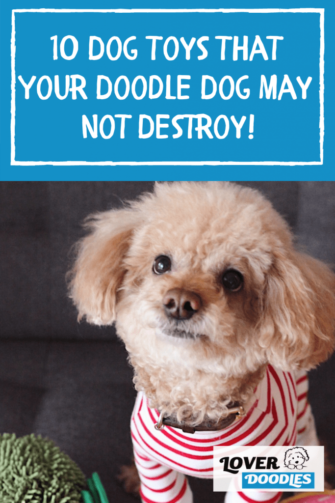 10 Dog Toys That Your Doodle Dog May Not Destroy!