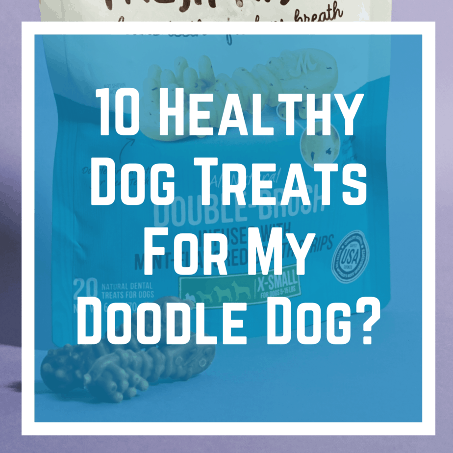 10 Healthy Dog Treats For My Doodle Dog?
