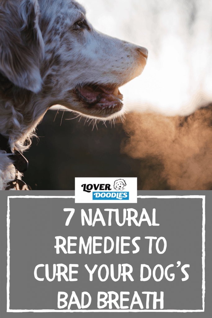 7 Natural Remedies to Cure Your Dog's Bad Breath