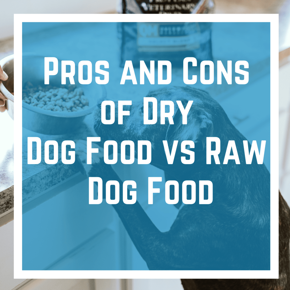 Pros and Cons of Dry Dog Food vs Raw Dog Food