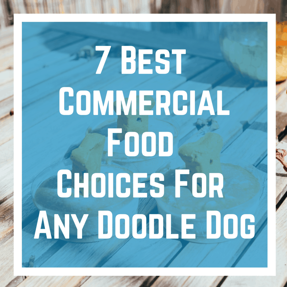 7 Best Commercial Food Choices For Any Doodle Dog