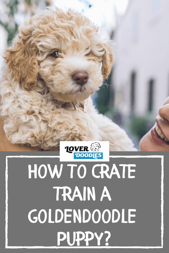 How To Crate Train a Goldendoodle Puppy?
