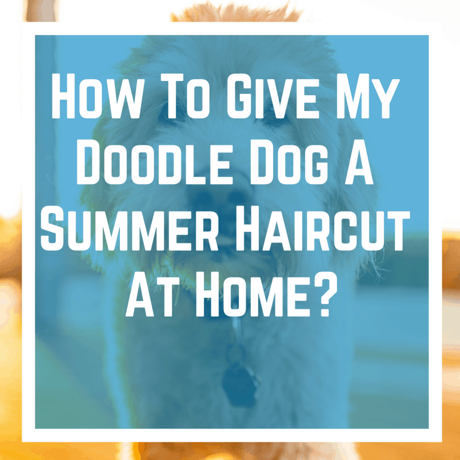 How To Give My Doodle Dog A Summer Haircut At Home?