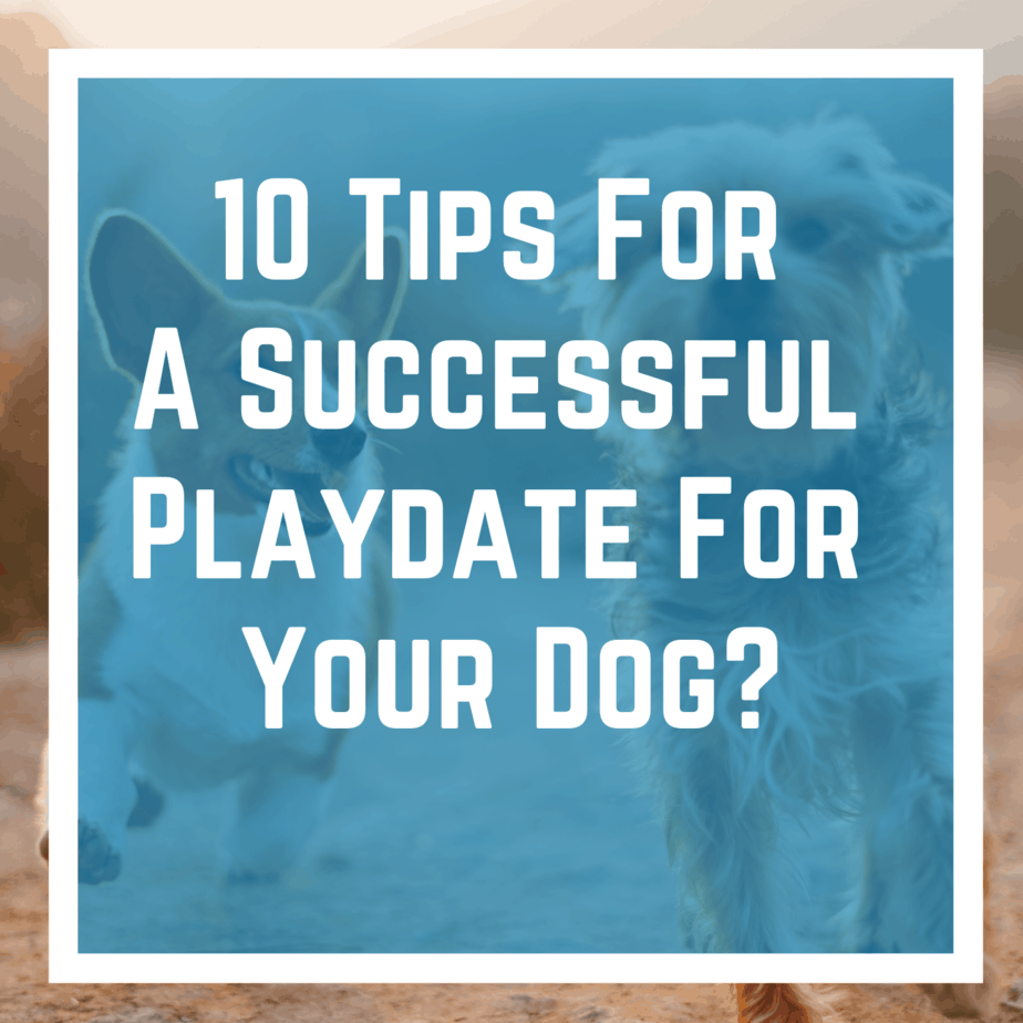 10 Tips For A Successful Playdate For Your Dog?