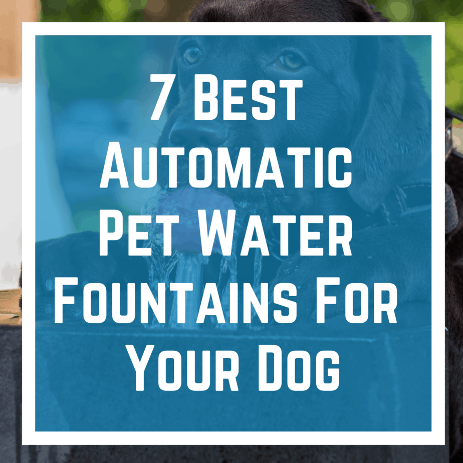 9 Best Automatic Pet Water Fountains For Your Dog