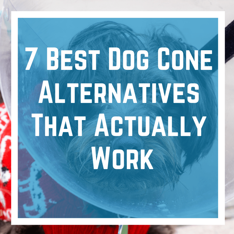 7 Best Dog Cone Alternatives That Actually Work