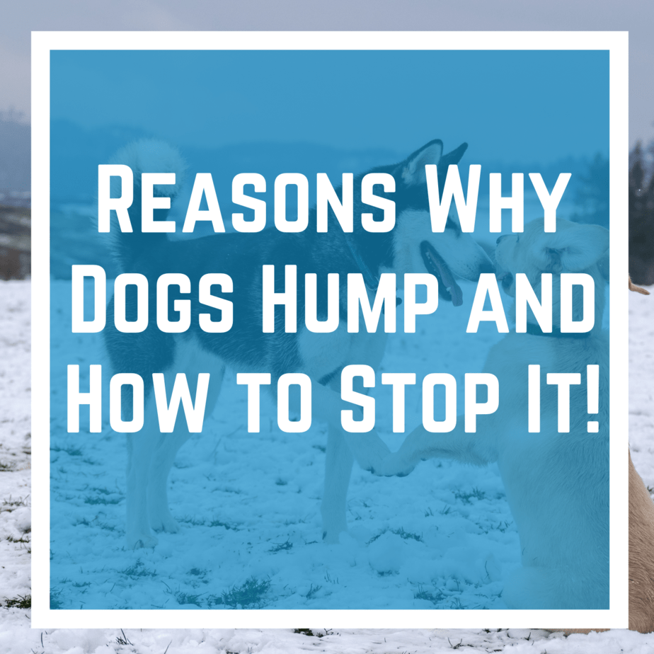 Reasons Why Dogs Hump and How to Stop It!