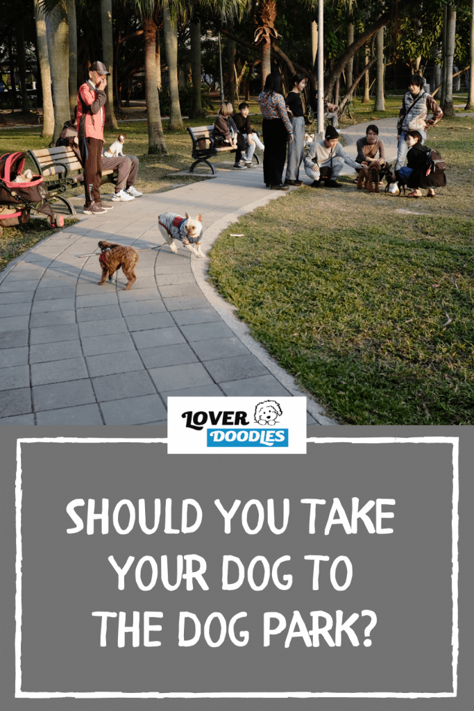 Should You Take Your Dog To The Dog Park?