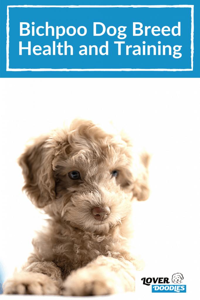 Bichpoo Dog Breed Health and Training