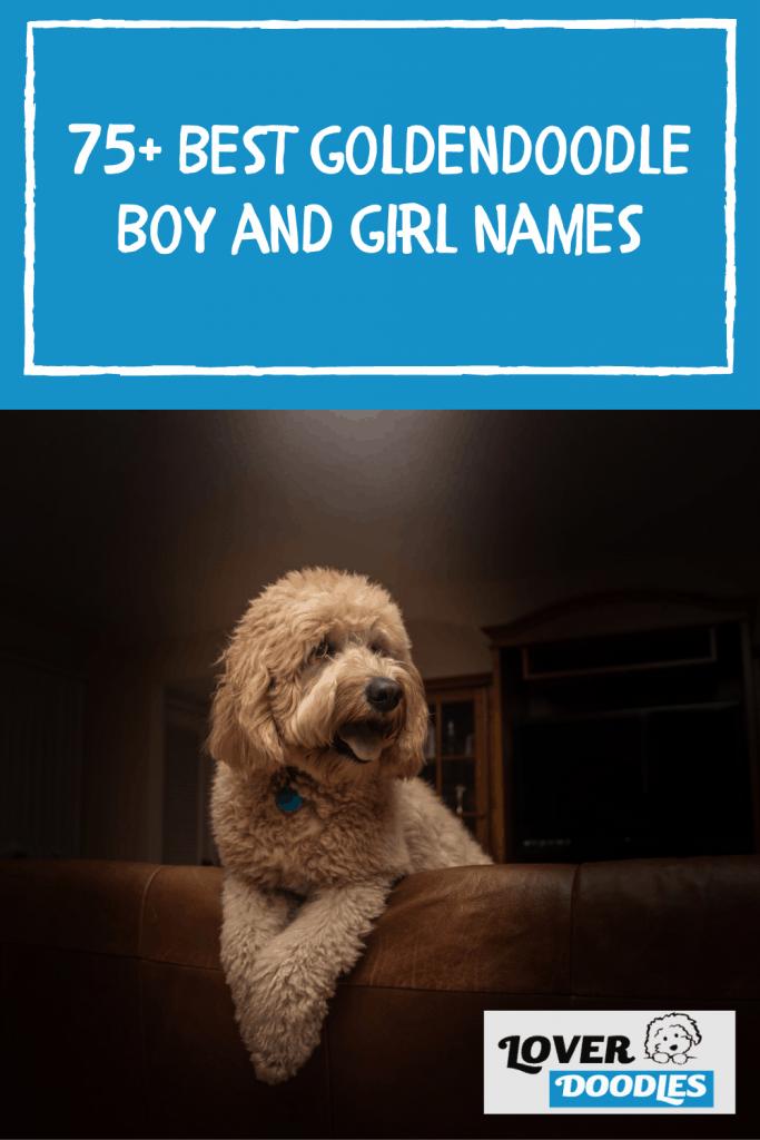 75+ Best Goldendoodle Boy and Girl Names