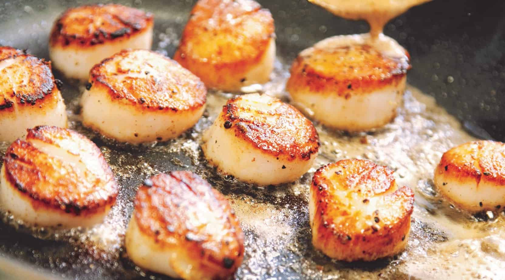 Can Dogs Eat Scallops?