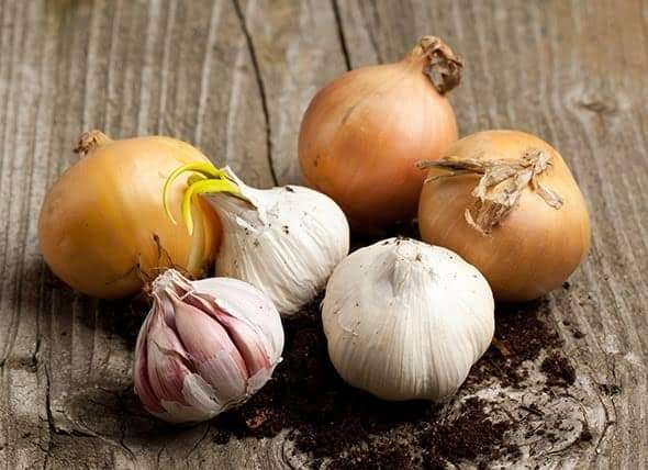 Onion/Garlic