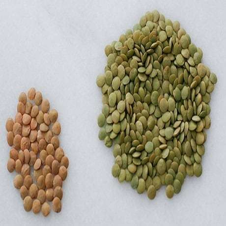 Green Beans, Lima Beans, and Lentils