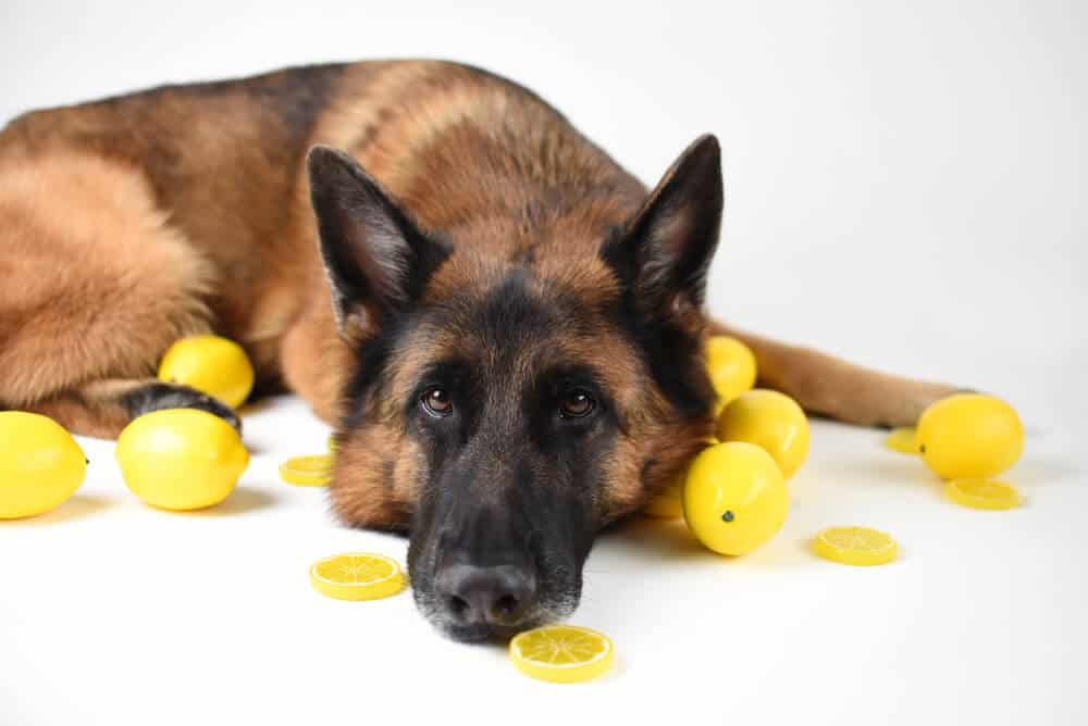Are Lemons Any Good for Dogs?