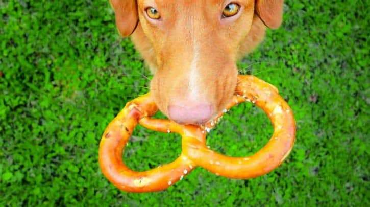 What Should You Do If Your Dog Ate Pretzels?